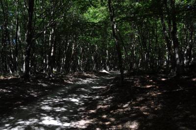 ...mutta tänään onneksi pääosin varjoisaa metsää.