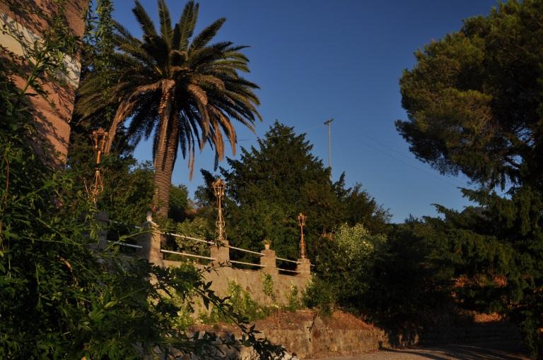 Täällä kasvaa jo palmutkin