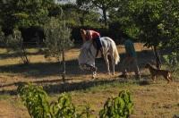 Välillä hevoset on jukureita.