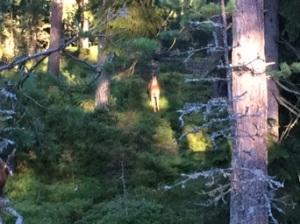 Heti alkuun näimme peuran tms. hirvieläimen