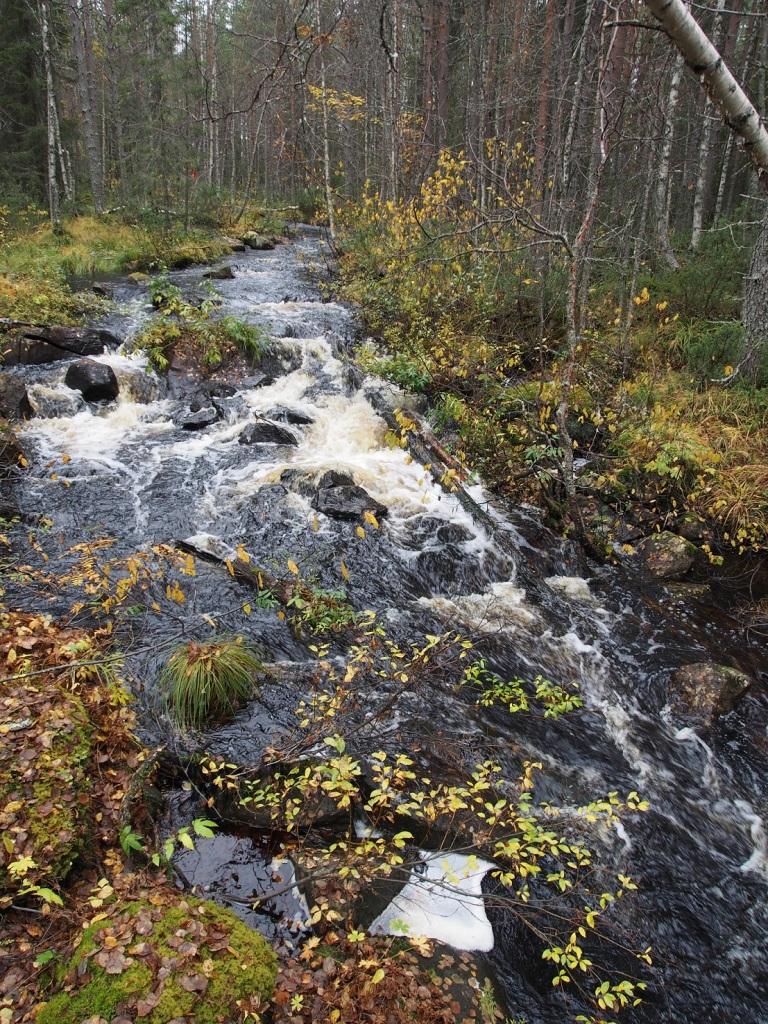Kellojoen keskivaiheila on isompi kivinen kosken porras. Hyvin kivinen paikka vaikka suoraa linjaa voikin laskea. Siis näillä vesillä, mutta kesällä varmasti hyvin kuiva.