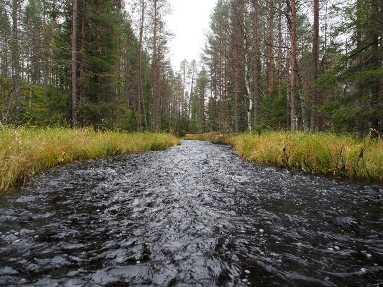 Salakkolampien jälkeen joki muuttui hieman leveämmäksi ja samalla tietysti matalammaksi. Pudotusta Lavanjärveen on lyhyellä matkalla aikalailla ja meno oli melkoisesti pohjan pikkukiviä viistävää. Ei tahtonut löytyä tarvittavaa syvyyttä. Kesällä varmasti vedettäviä pätkiä. Pohja on kuitenkin suht tasainen eli kävely on helppoa.