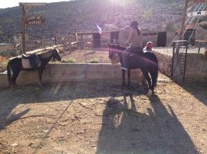 Ratsutilalla valmiina lähtöön, tuo pieni hevonen sai minut selkäänsä...