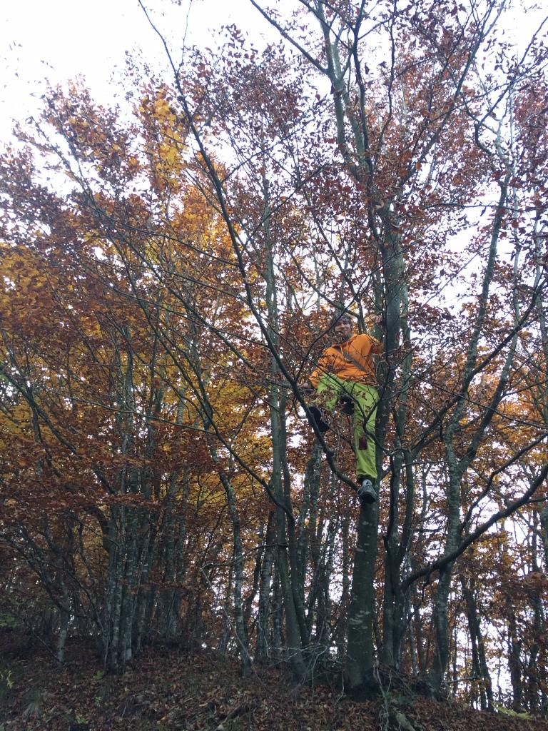 ...ja välillä kiipesin puuhun...